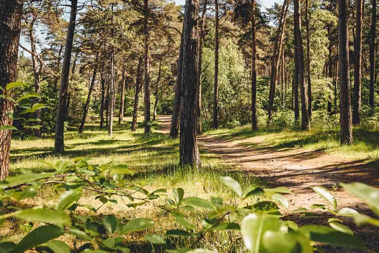 Küstenwald Lubmin