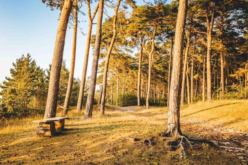 Wanderweg in der Lubminer Heide